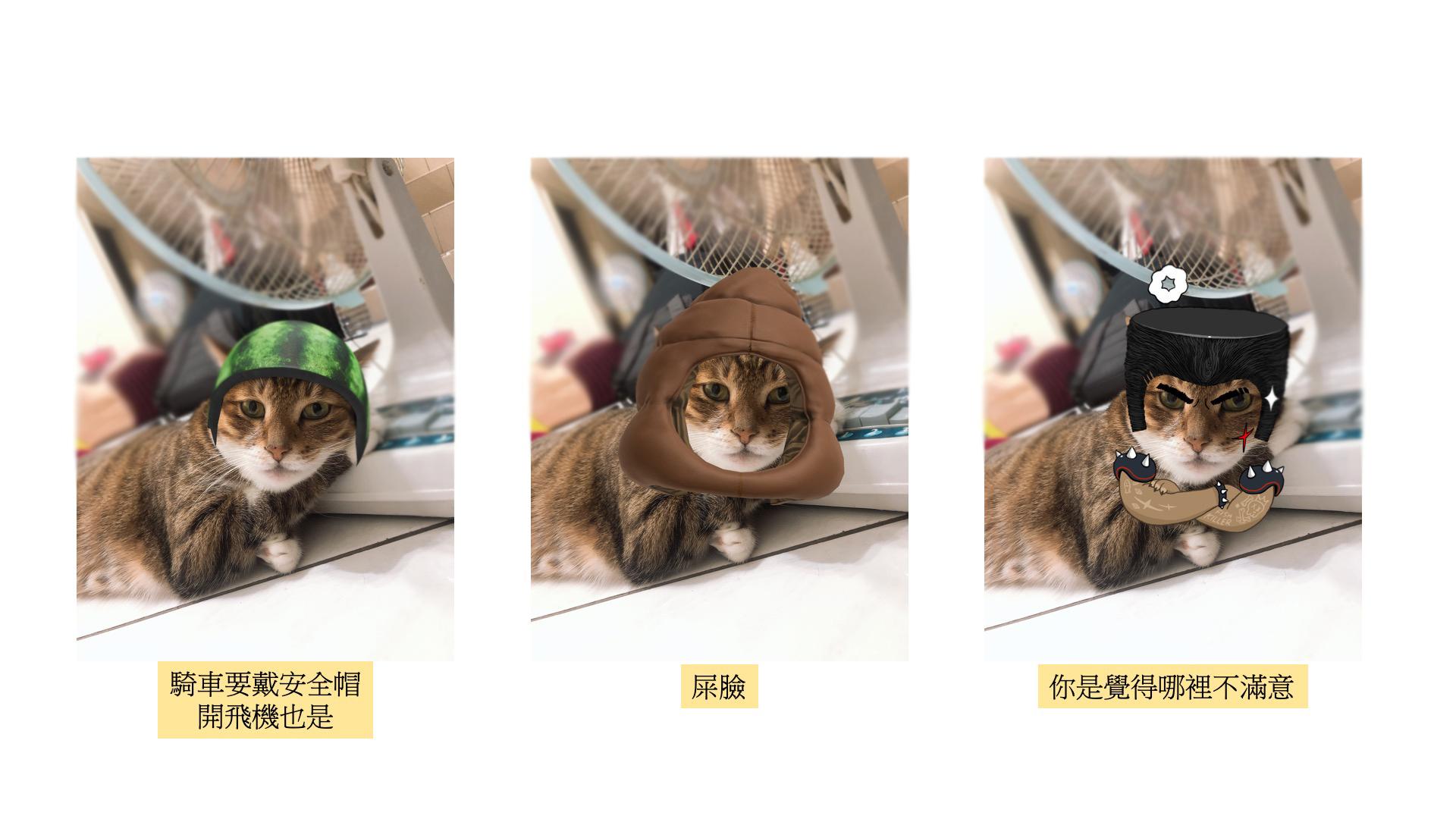 有趣又可愛的貓咪臉孔特效