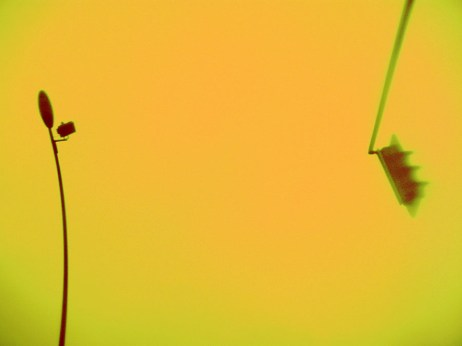 Foto: Straßenlampe und Ampel auf gelben Hintergrund