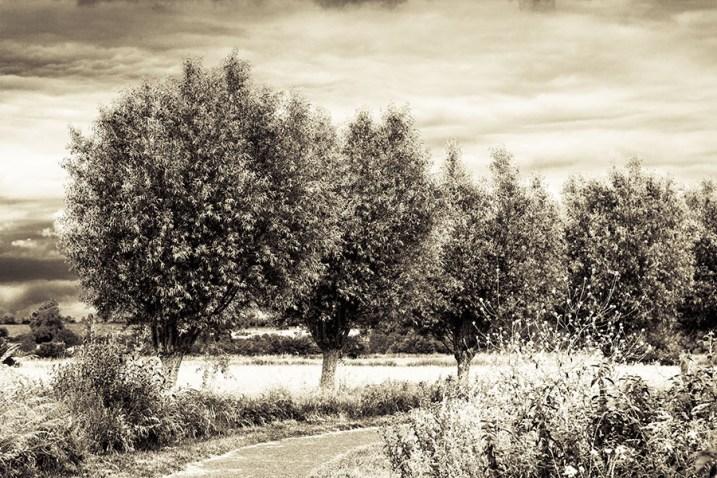 Foto, Landschaft in der Normandie, Baumreihe