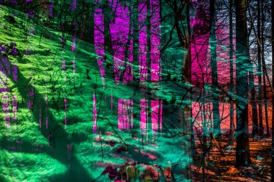analog, Wald, Winter