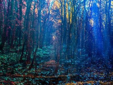 analog, Wald