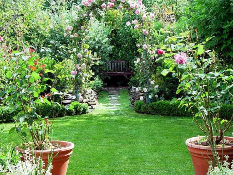 Hiasi Rumah dengan 4 Jenis Tanaman Organik Ini