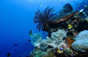 Diving Takabonerate