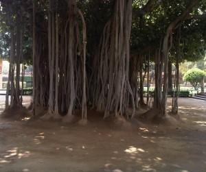 Thinking tree (2)