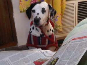 Sparky reading the newspaper