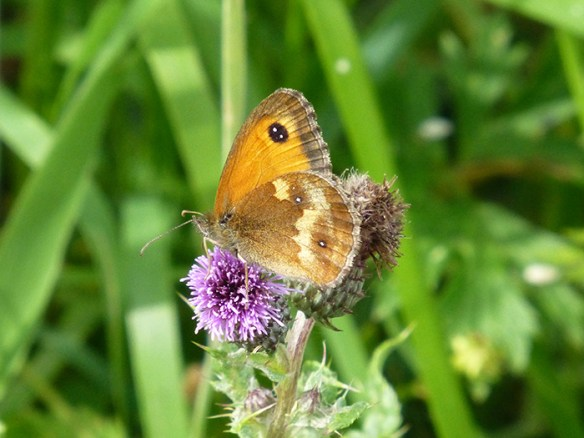 small-heath-1