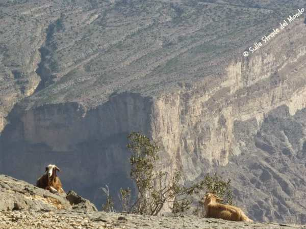 Il grand Canyon d'Arabia