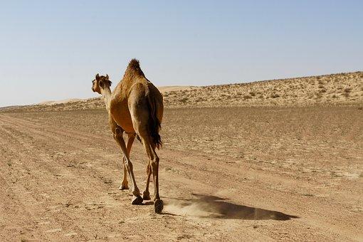 Mercati e souq in Oman