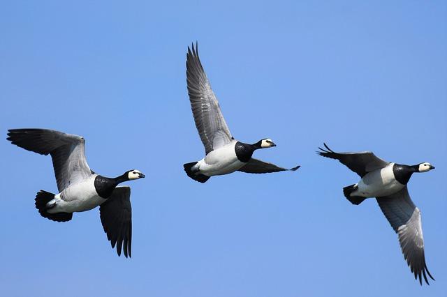 cosa fare a Terschelling: birdwatching