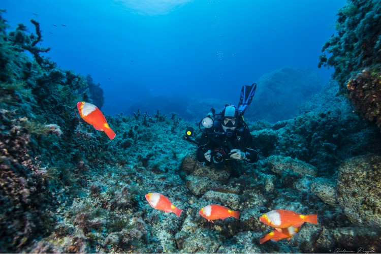 immersioni subacquee a Malta