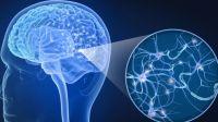 Ilustrasi kerja sistem saraf pada manusia.