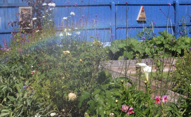 rainbow, Irish garden, vegetable garden, kitchen garden,