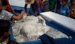 Muntahan Paus Bernilai Miliaran Rupiah Ditemukan Nelayan Puma