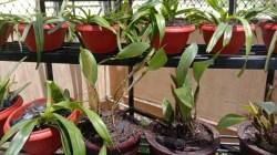 Salah satu jenis koleksi tumbuhan yang ada di Kebun Raya Kendari. (Foto : Hasrul Tamrin/SULTRAKINI.COM)