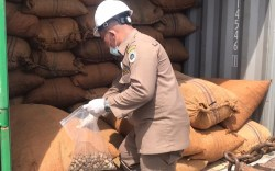 Biji Mete Asal Butur 48 Ton di Ekspor ke Vietnam