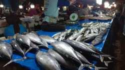 Jenis Ikan Cakang dan Lajang di Pasar Mall Mandonga (Foto: Wa Rifin/SULTRAKINI.COM)