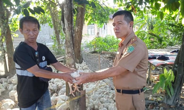 Jelang Idul Fitri, Bupati Kery Bagikan Ayam Potong ke 11 Desa di Konawe