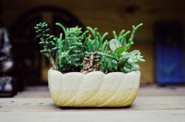My friend's planter
