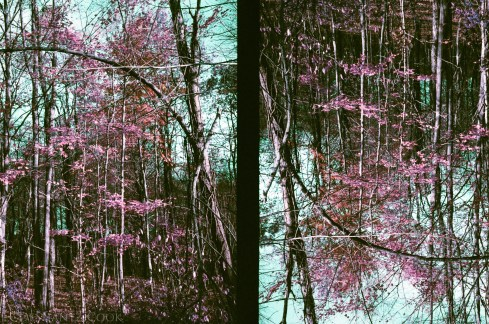 Forest two ways, Olympus Pen EE3, Lomography Lomochrome Purple