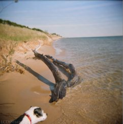 Holga, dog photobombed my beach scene, dots in sky