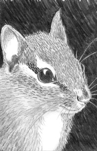 "Chipmunk: (sold) 2016 5"" x 7"" graphite"