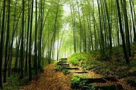 Baños de bosque: la última tendencia contra el estrés