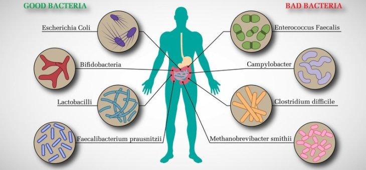 Los 'inquilinos' de tu intestino influyen en tu salud