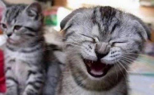 La risa es una cosa seria