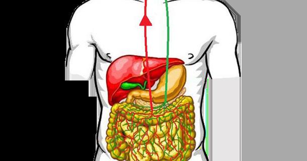 Salud: busca la relación entre intestino y cerebro