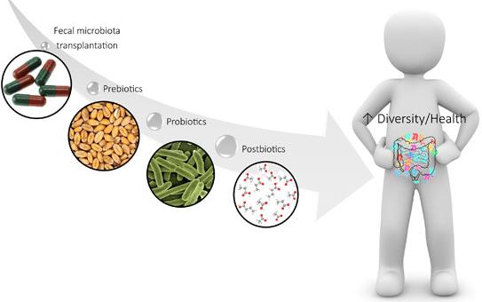 Microbiota: El poder oculto de nuestro intestino