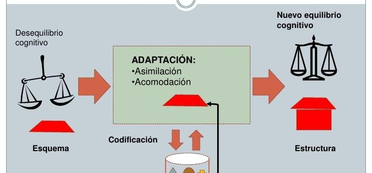 Los procesos de adaptación: la asimilación y la acomodación