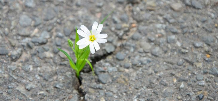 La felicidad depende de nuestra capacidad de adaptación