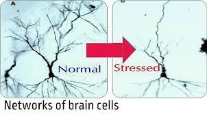 Un cerebro estresado resuena en tu cuerpo