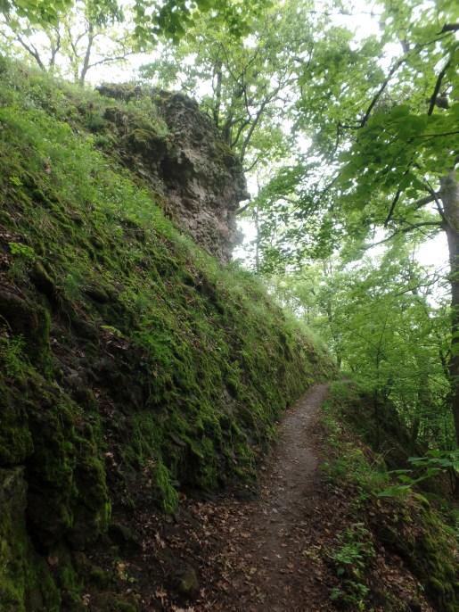 Zöld erdőben kis ösvény..