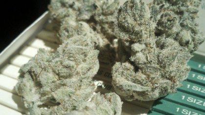Buy White OG strain online | White OG strain for sale | White OG