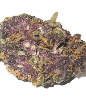 Buy Grandaddy Purple online
