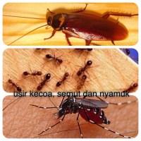 Cara mengusir Kecoa, Semut dan Nyamuk