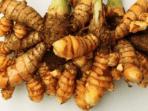 manfaat tanaman herbal bagi kesehatan