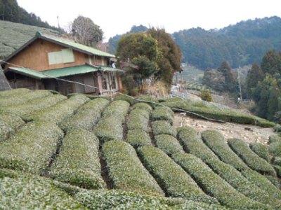 静岡県浜松市の別荘&田舎物件 茶畑付き農家物件 6DK 580万円