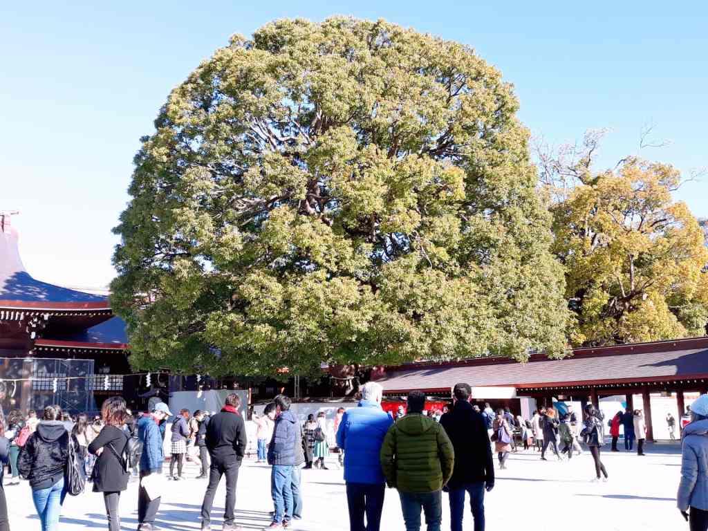 meiji jingu_tree