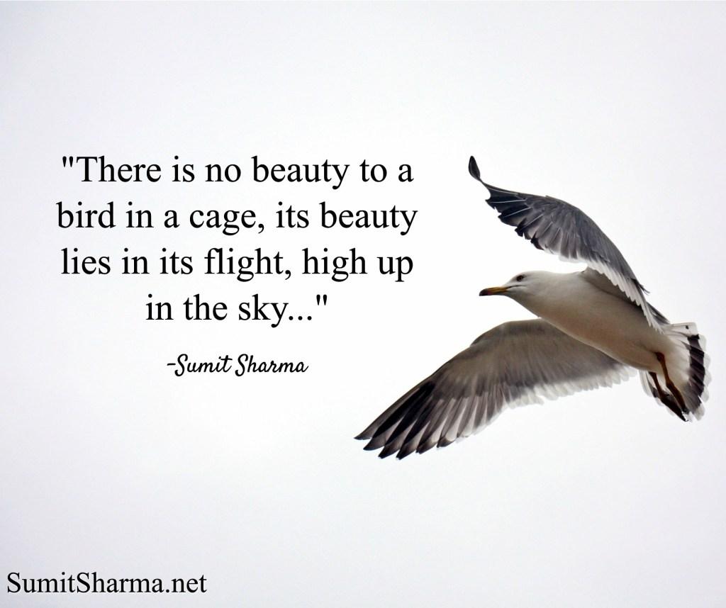 The Flight of a Bird