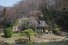 枝垂れ梅と東屋