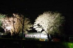 桜は駐屯地の敷地内