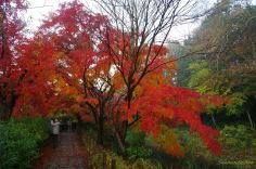 紅葉のトンネル@じゅんさい池緑地公園