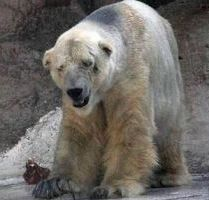Kids in Schools Are Like Polar Bears in Zoos: Bad Habitat
