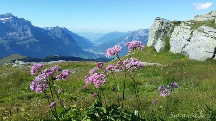 Bergflora Leglerhütte