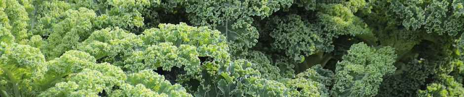 The most delicious kale you'll ever eat!
