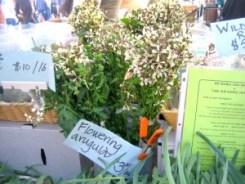 Flowering Arugula