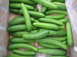 Mediterranean Cucumbers