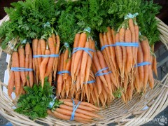 Bunch Carrots